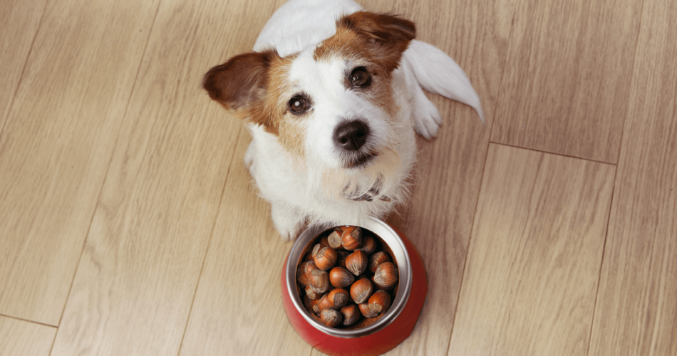 can-dogs-eat-chestnuts