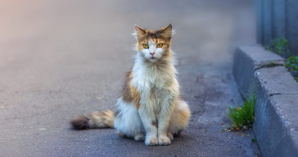 find-lost-cat