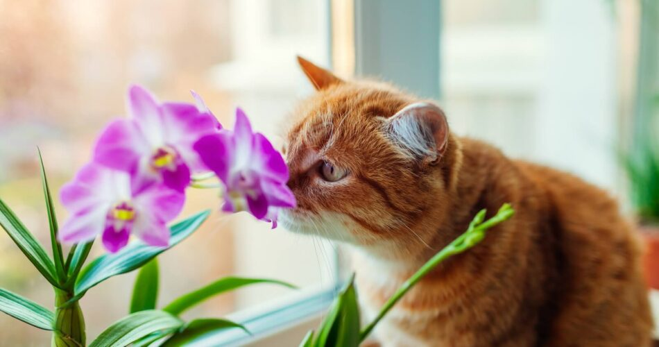 are-orchids-toxic-for-cats