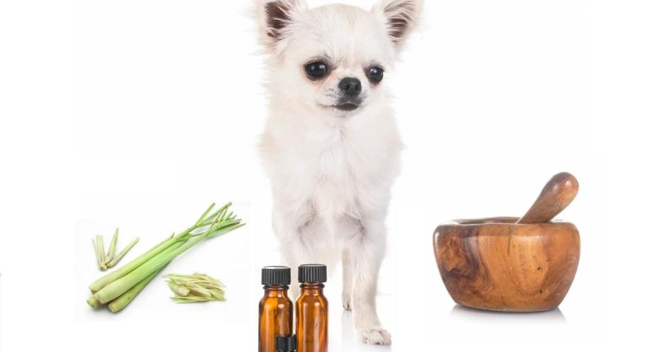 is-lemongrass-oil-safe-for-dogs