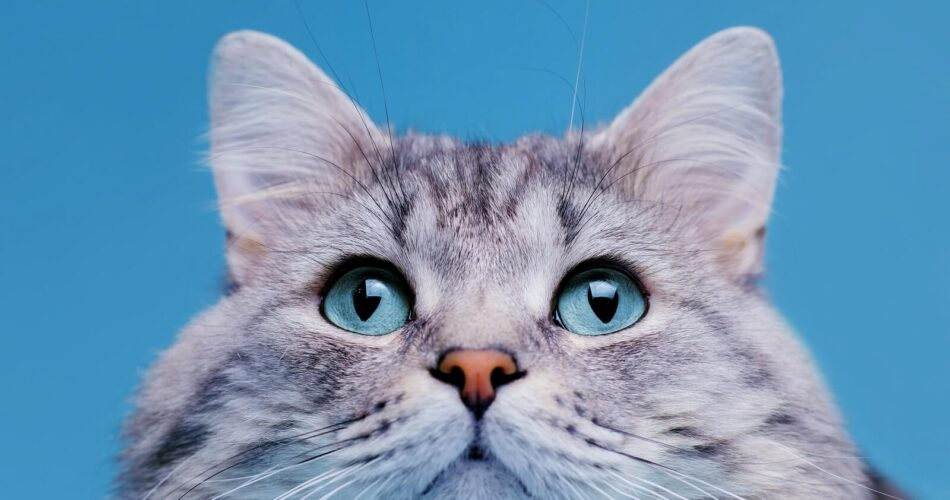 why-cats-nose-wet