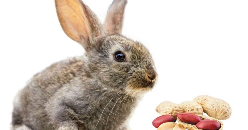 can-rabbits-eat-peanuts