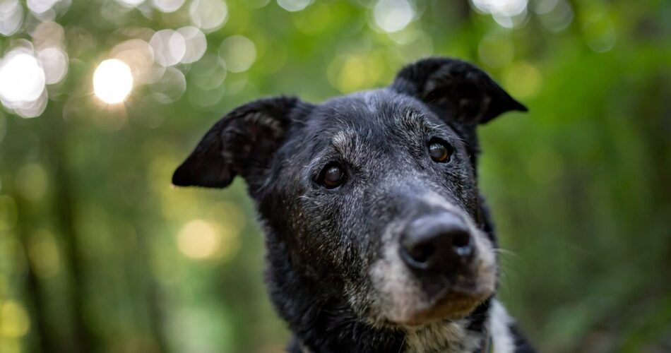 signs-that-your-dog-is-getting-old