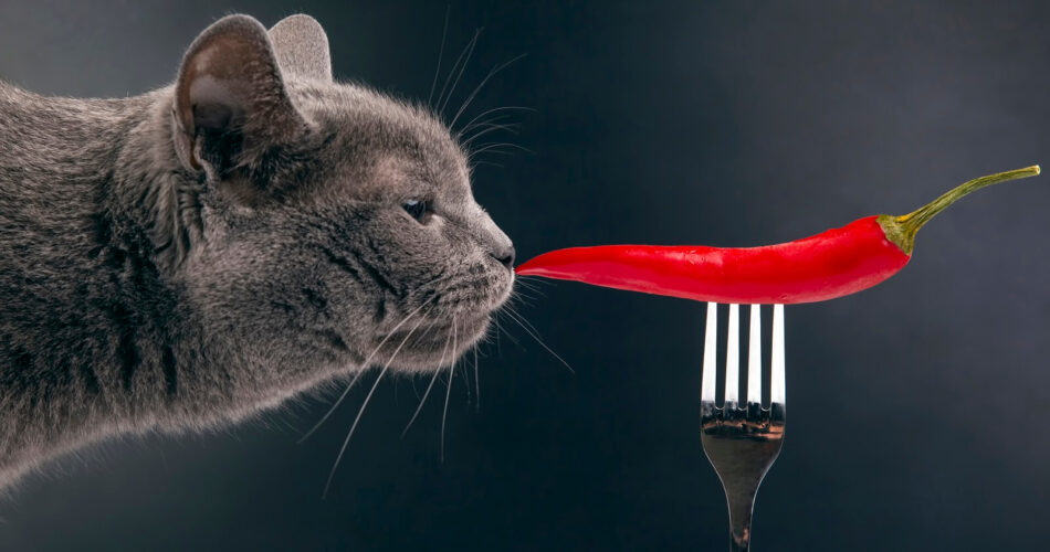 what scents do cats hate