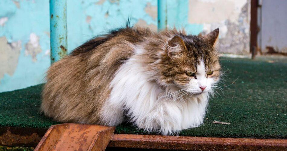 Lost Cat Websites