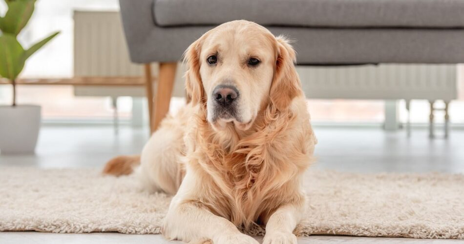 Dogs Which Can Be Left Alone