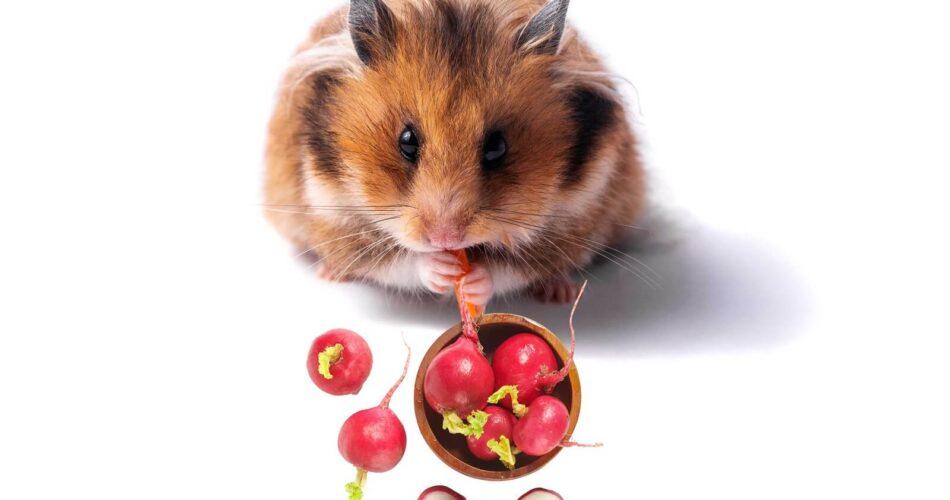 Can Hamsters Eat Radish